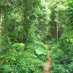 thailand-jungle