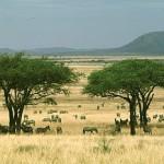 serengeti01