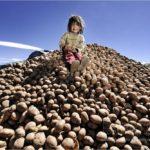 peruvian_potatoes